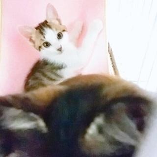 生後2ヵ月:好奇心旺盛カプリコ