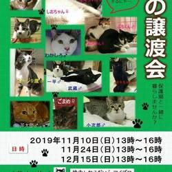 11/10(日)ねこだいら譲渡会(東京都小平市)