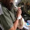 真っ白シニア猫「くるちゃん」決まりました! サムネイル2