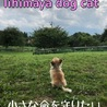 lihimaya dog cat
