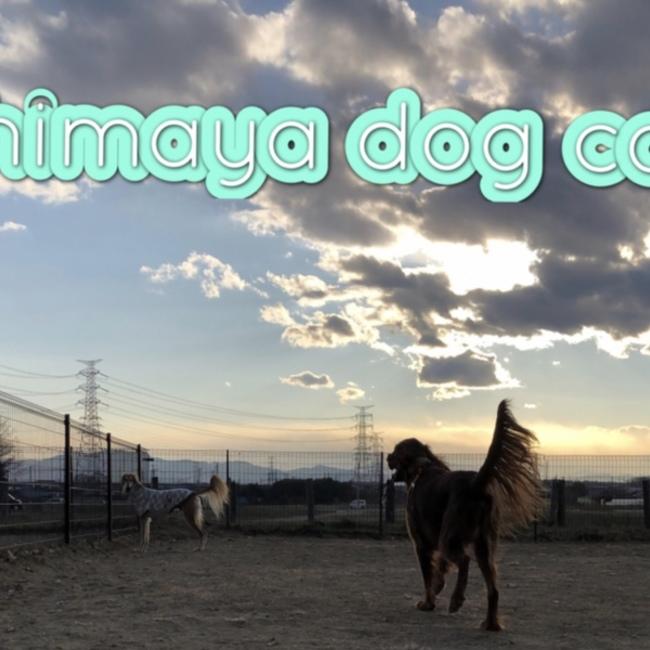 lihimaya dog cat のカバー写真