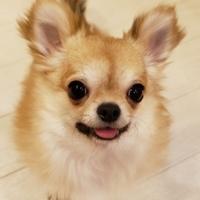 コンちゃん(本名 : コロン)