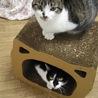 可愛い可愛いギャング猫 サムネイル6