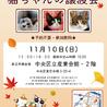 【11/10東日本橋】可愛い三毛猫♡むぎちゃん サムネイル7