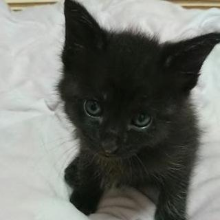 とっても美形黒猫ジローくん