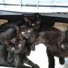 保健所からレスキュー可愛い黒猫