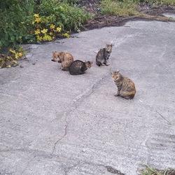 「台風19号で調整池に沈んだ猫たち」サムネイル1