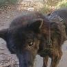 甲斐犬です ほとんど吠えない静かな犬です サムネイル6