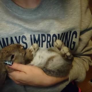 ネザー×ロップイヤー 子ウサギ