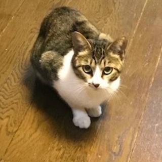小柄なメス猫です。