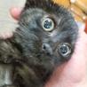 小さな漆黒の月 生後3ヶ月 サムネイル2