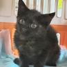 小さな漆黒の月 生後5ヶ月 サムネイル4