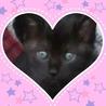 かわいい黒猫の女の子の里親募集です。 サムネイル4