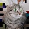 成猫/6歳くらいの女の子 サムネイル2