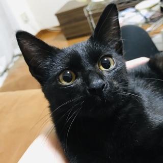 魔女の宅急便のジジみたいな黒猫ちゃん♡