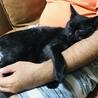 魔女の宅急便のジジみたいな黒猫ちゃん♡ サムネイル2