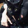 魔女の宅急便のジジみたいな黒猫ちゃん♡ サムネイル5