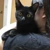 魔女の宅急便のジジみたいな黒猫ちゃん♡ サムネイル6