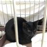 静かな黒猫です