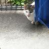 人懐っこい猫です サムネイル2