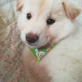 ふわもふの可愛い子犬男の子