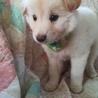 ふわもふの可愛い子犬男の子 サムネイル2