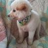ふわもふの可愛い子犬男の子 サムネイル4