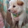 ふわもふの可愛い子犬男の子 サムネイル7
