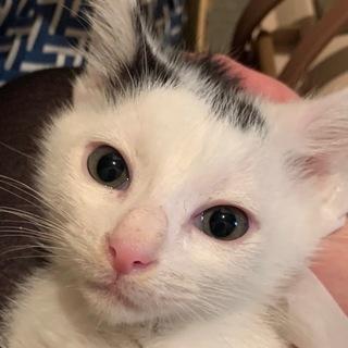 外猫が産んだ可愛い仔猫---A.イケメンのイチロー