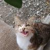 【急募!!!】母親事故死のみなしご【助けて】 サムネイル3