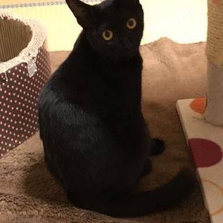 愛おしい♥️黒猫3兄妹