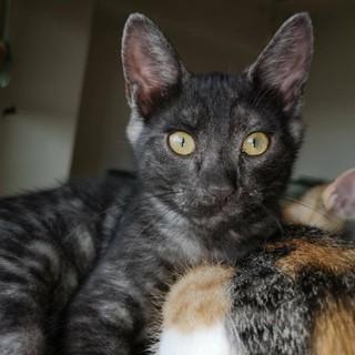膝乗り猫、甘えん坊のひろくん