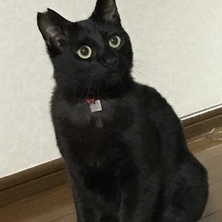 元気いっぱいな黒猫男子