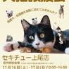 セキチュー上尾店犬猫譲渡会(室内)開催
