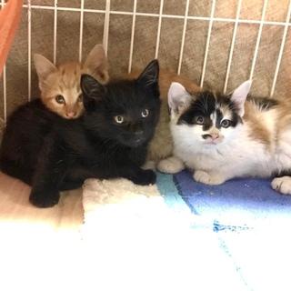 危険な場所から救出、母猫が野良の3兄弟