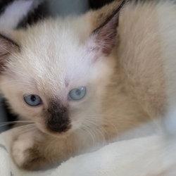 「子猫30匹の譲渡会」・愛知県みよし市 サムネイル3