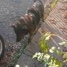 甲斐犬です ほとんど吠えない静かな犬です サムネイル2