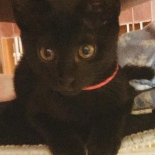 可愛い黒猫クロエちゃん