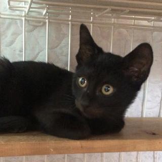 甘えん坊の黒猫ちゃん❣️