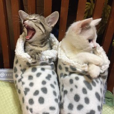 暖かくて眠いニャ・・・