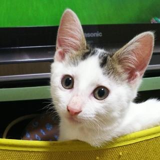 お風呂もついてくる大福3ヶ月人も猫も大好き!