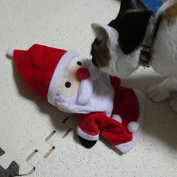 サンタが遊びにやってきた