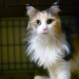 飼い主入院の為■9匹の大人猫ご縁募集■