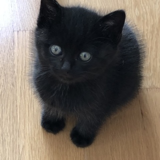 迷い込んだ黒い子猫