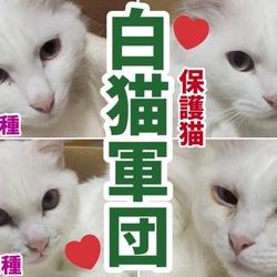 【白猫軍団】保護猫4期生♡陸海空