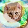 猫初心者向け♡肩まで登る激甘えん坊フレンド♂5ヶ月