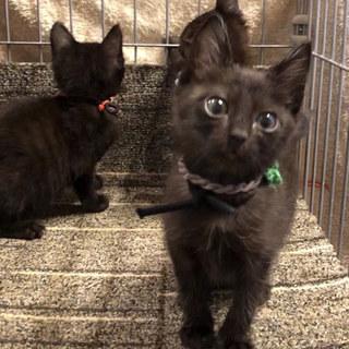 黒猫4兄妹うるしちゃん♀