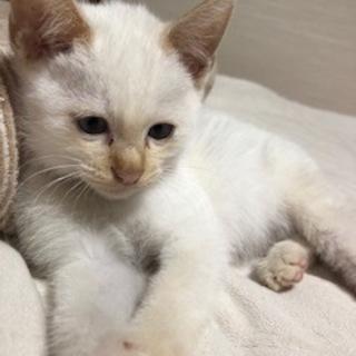10月31日に保護したちっちゃい白猫