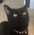【11/17お台場】黒猫のタンゴくん 初心者歓迎