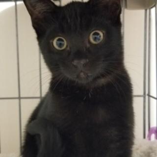 黒猫のクロエちゃん美人さんです❣️